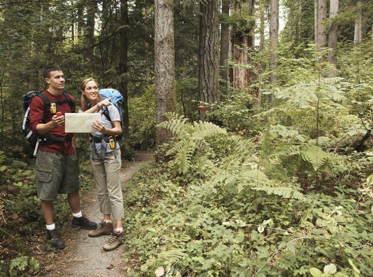 Что делать, если потеряешься в лесу