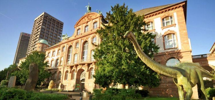 Зенкенбергский музей Франкфурт